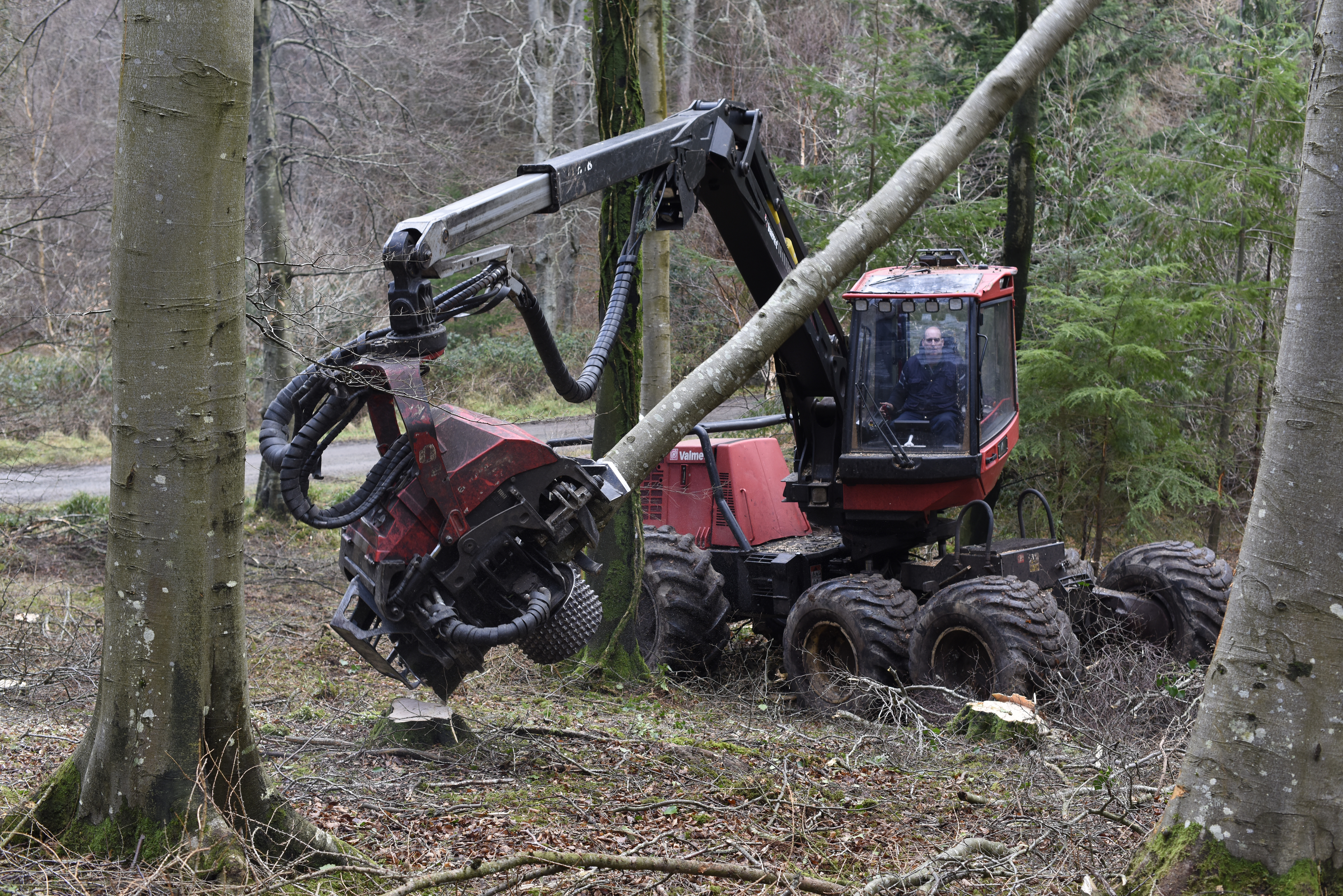 Image of Forest Service NI vehicle in Tollymore Forest